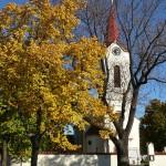 Dubeč, jasan ztepilý u kostela sv. Petra