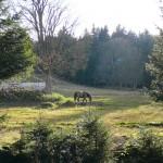 Šumava, koně