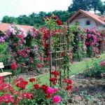 penzion-roseta-radejov-rozarium2