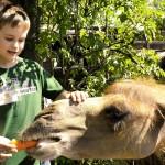 Praha - zoo v Tróji